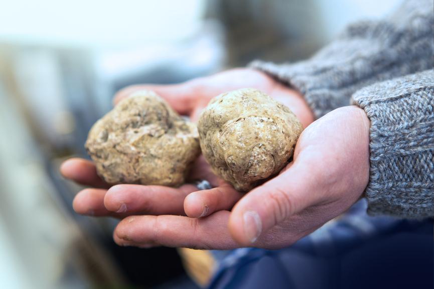 Weißer italienischer Trüffel kaufen München